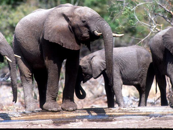 Wilderer töten gefährdeten Sumatra-Elefanten in Indonesien.